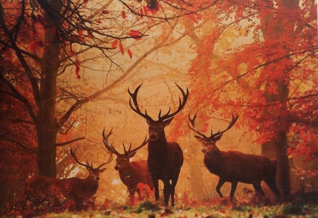 Billede i træ med krondyr i efterårs skov