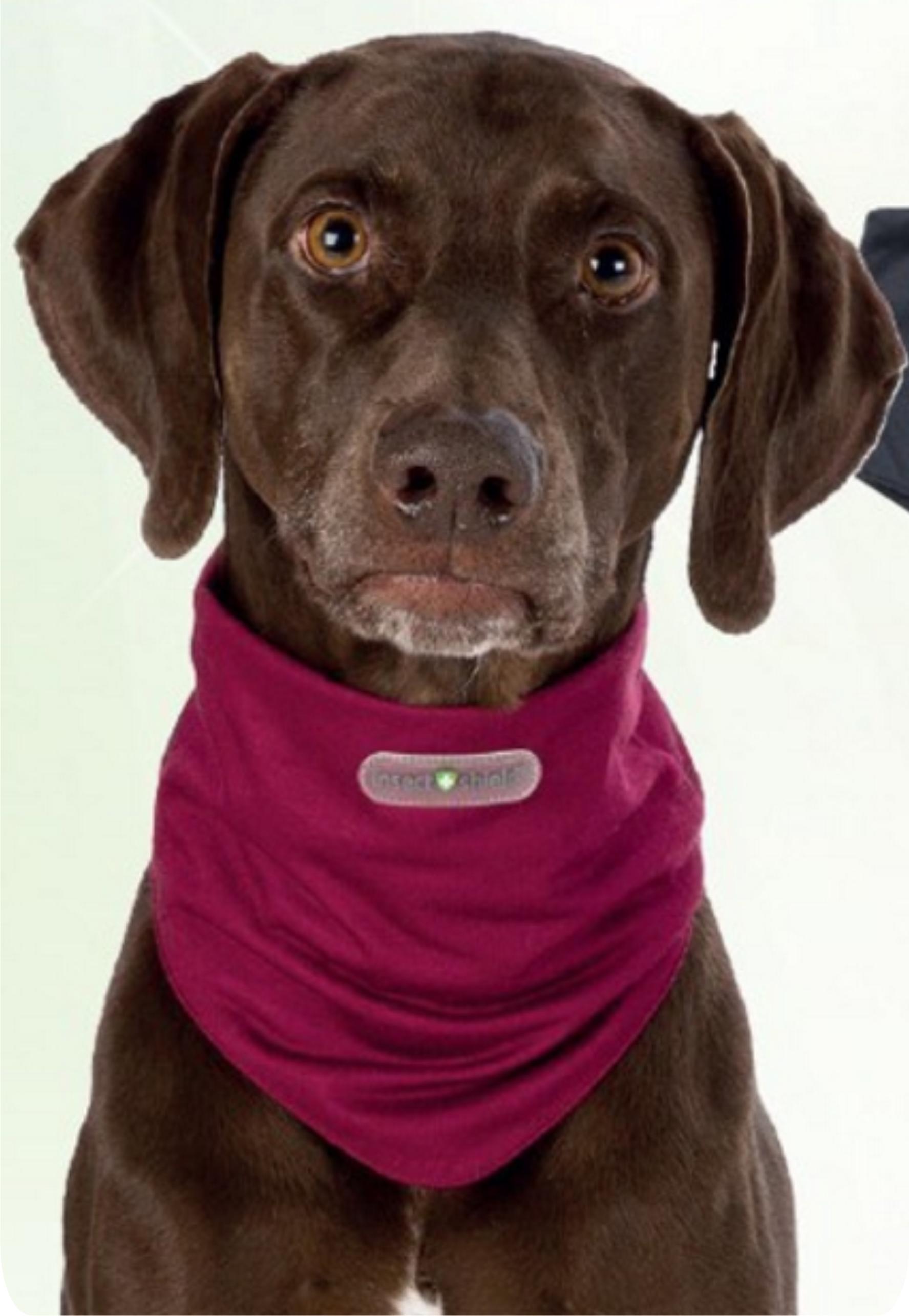 Insect Shield tørklæde til hunde 00409