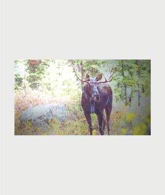 Billede i stål med elg