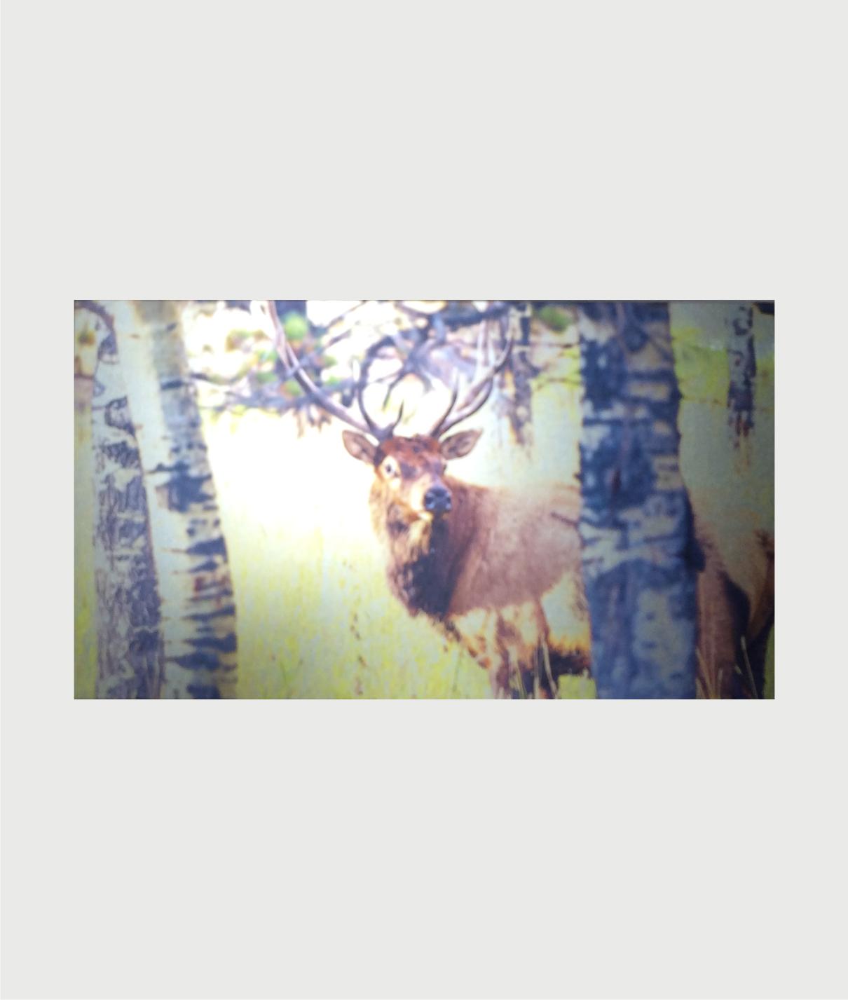 Billede i stål med hjort ved birketræ