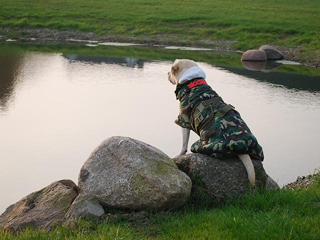 Siccaro Spirit hundekåbe