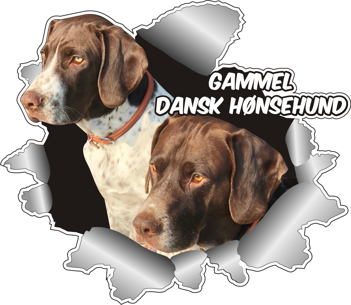 Klistermærke - Gammel Dansk Hønsehund