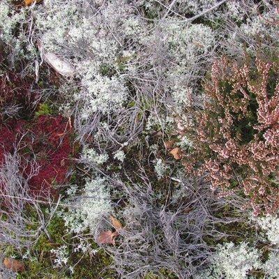 FURSAXA 'Mycorrhizae Realm' CD / LP (with download code)