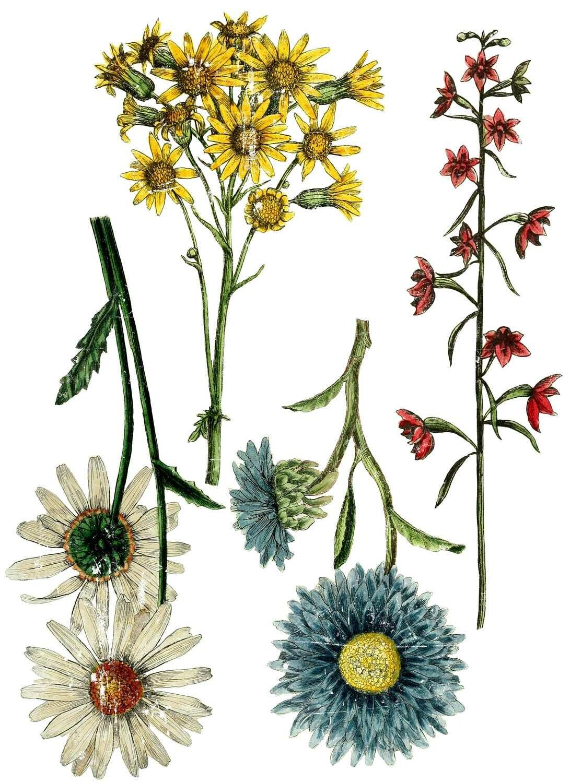IOD Wild Flower Botanicals 24×33 Decor Transfer