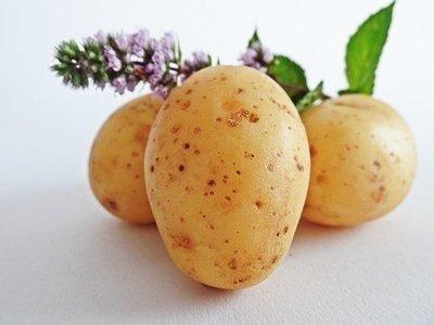 Patates blanches bio 5 lbs