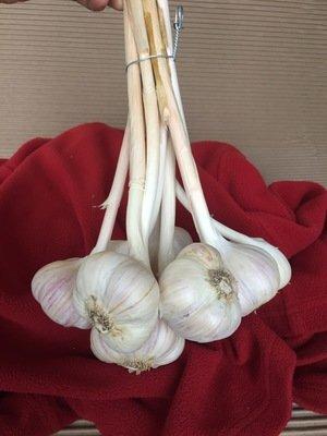 Bouquet d'ail bio 500 g