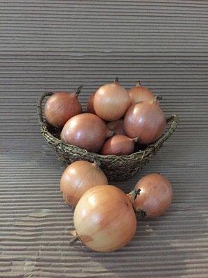 Oignon jaune bio 5 lbs