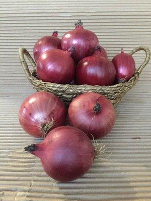 Oignon rouge bio 5 lbs