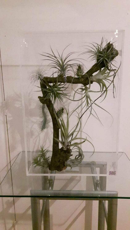 Natuurfragmenten in het florapaneel