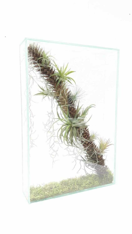 Florapaneel/Natuurfragmenten