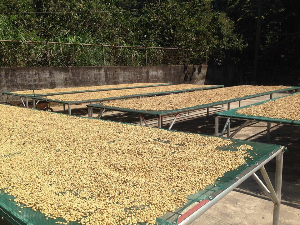Costa Rica- Willows Hacienda Miramante