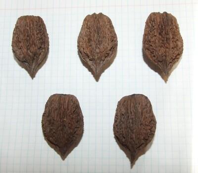 Семена ланкастерского ореха