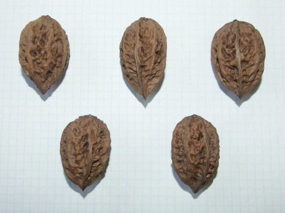 Семена маньчжурского ореха