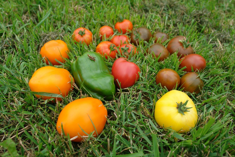 Семена овощей от проекта руспоселения.рф