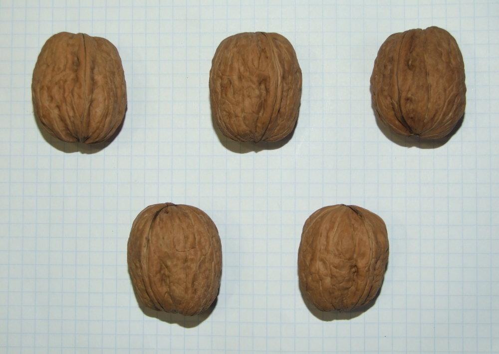 Семена ореха грецкого