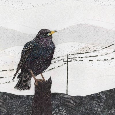'Chorus Line' Starling - Limited Edition Giclee Print