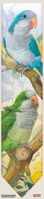 Quaker Parakeet - Neckties