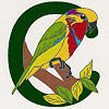 #19 Edward's  Fig Parrot - CITES Pins 119
