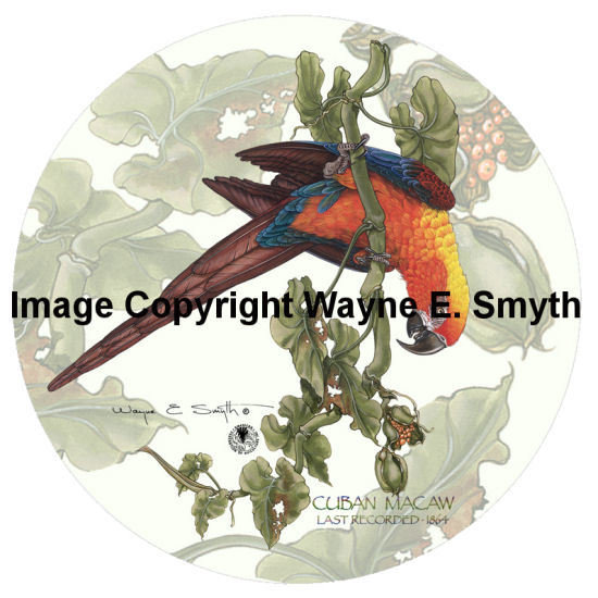 Cuban Macaw on Vine - Porcelain Plates 00030