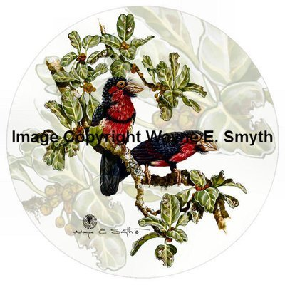 Bearded Barbet - Porcelain Plates