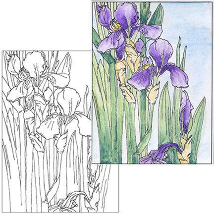Iris Coloring Page