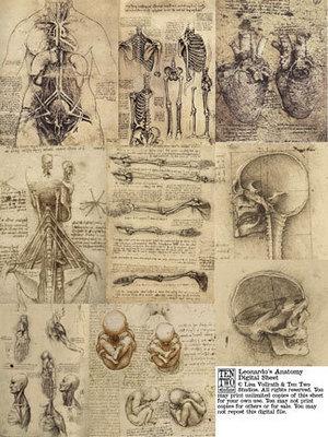 Leonardo's Anatomy