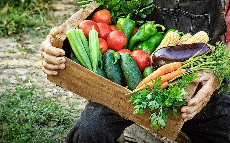 CSA Produce Box – Small Weekly Subscription (Saturday June 6, 9:00AM - Noon)