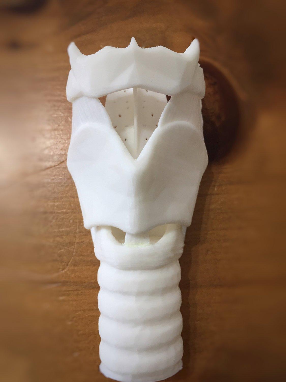 """""""Anatomy of the Larynx"""" Model - White"""