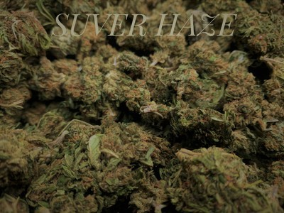 Lifter Hemp Flower 4 44 4 out of 5  stars572 72727272727273%73%49 090909090909092%9%30%0%218 181818181818183%18%10%0%See  all reviews 11 reviews | 1