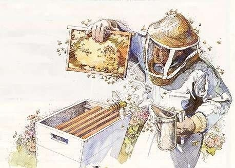 Montgomery County - Beginning Beekeeping Classes