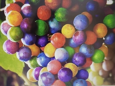 Rainbow Grape Seeds 100 Seeds