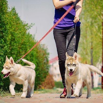4 Walks per Week