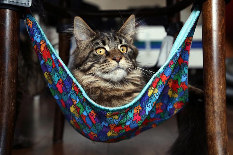 Я - кот, а чего добился ты?
