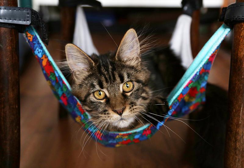 "Гамак для кошек на ножки стула ""Найди спящего кота"""