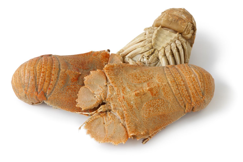 Frozen Slipper Lobster (Cray Fish)