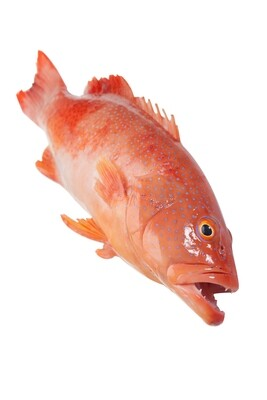 Frozen Red Grouper