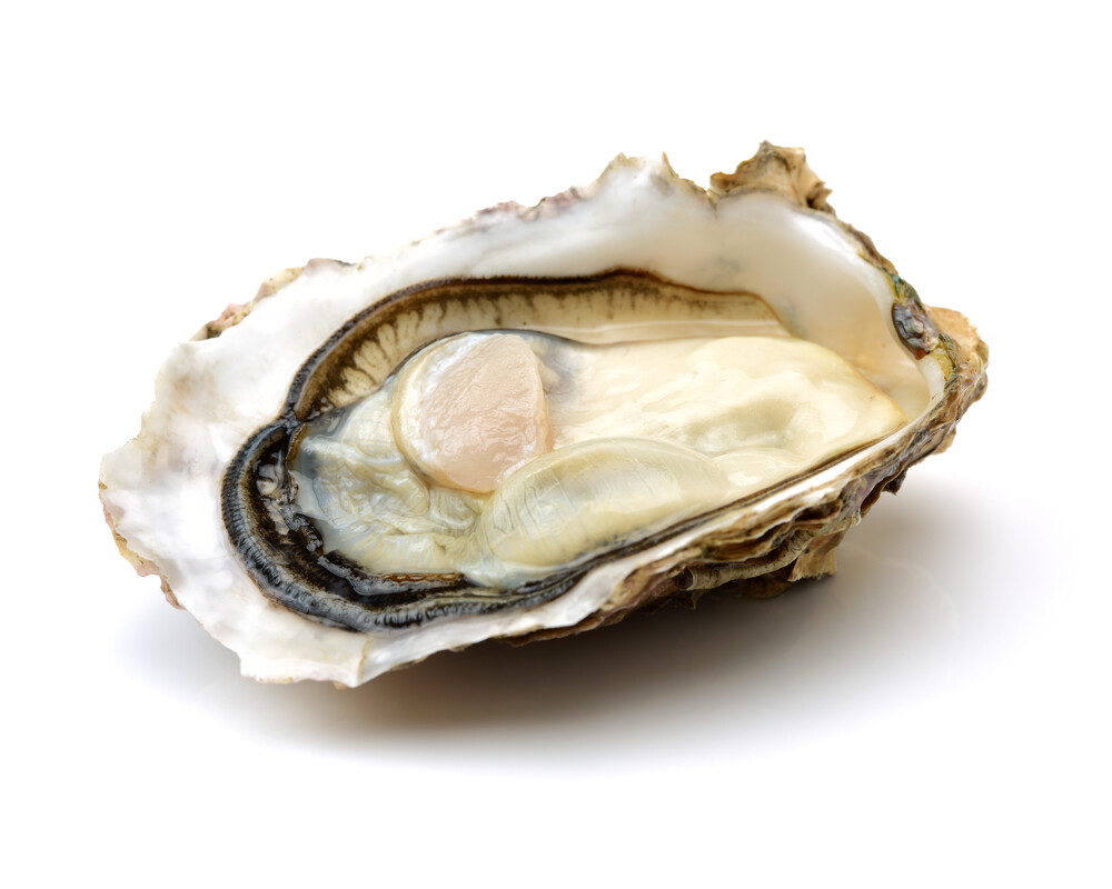 Frozen Half Shell Oyster (MUST COOK BEFORE CONSUMPTION)