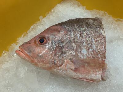 Frozen Red Snapper Fish Head