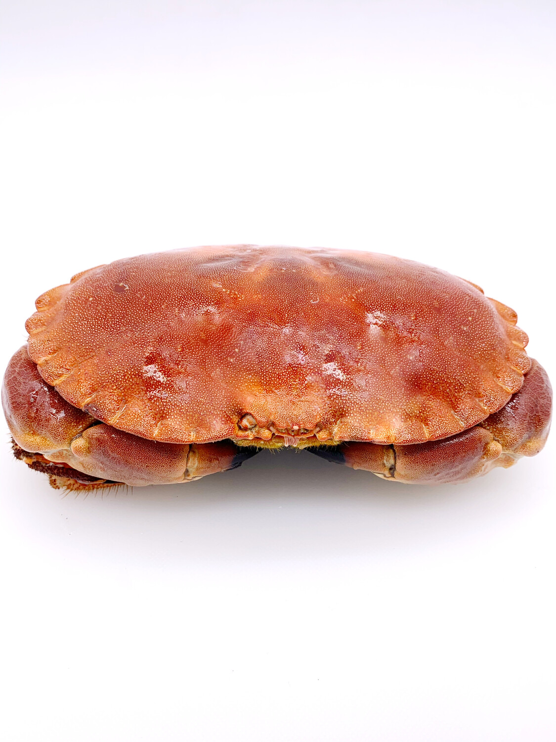 Ireland Cooked Brown Crab 600/800