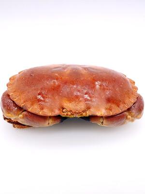 Ireland Cooked Brown Crab 600/800