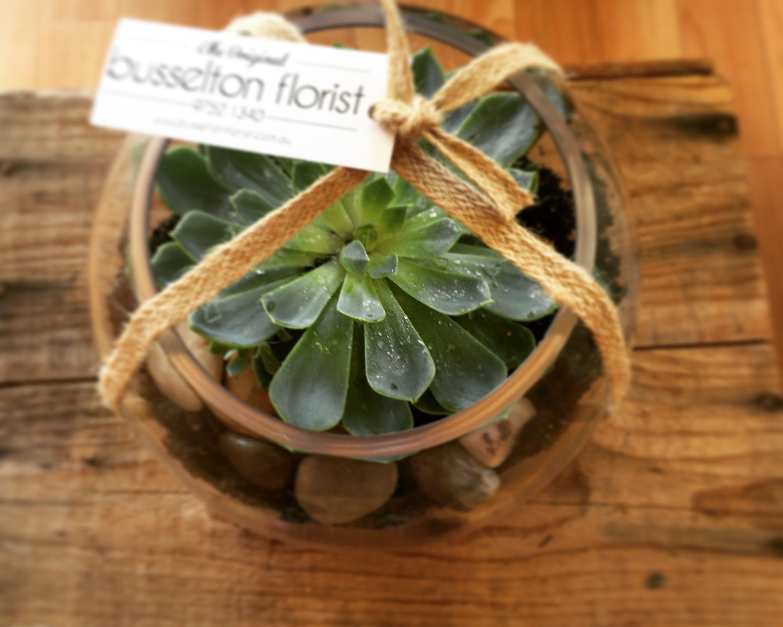 Succulent Plants 00044