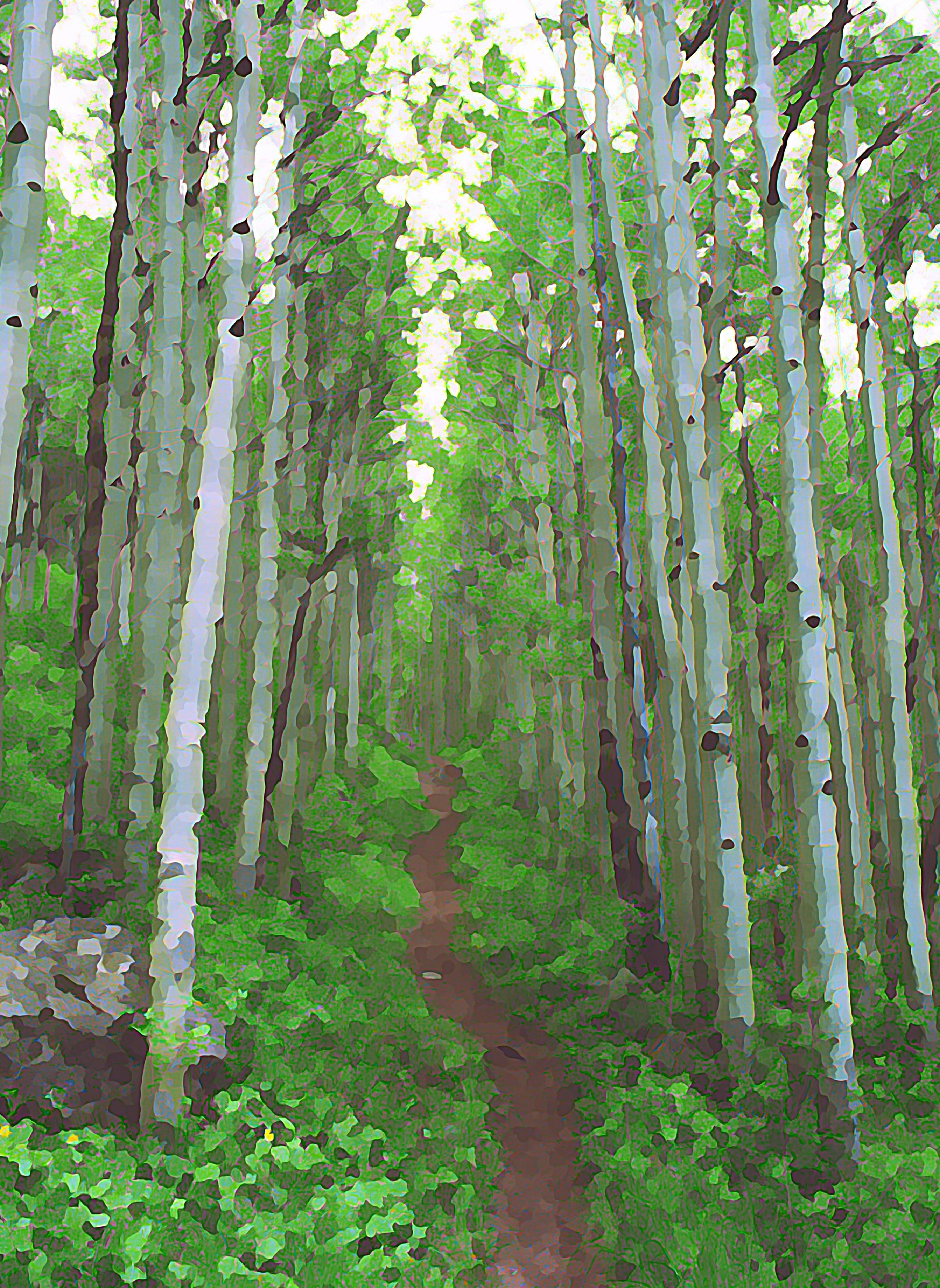 "16""x20"" Photographic Print artistic effect Aspen Trail above Vail, Colorado 00002"
