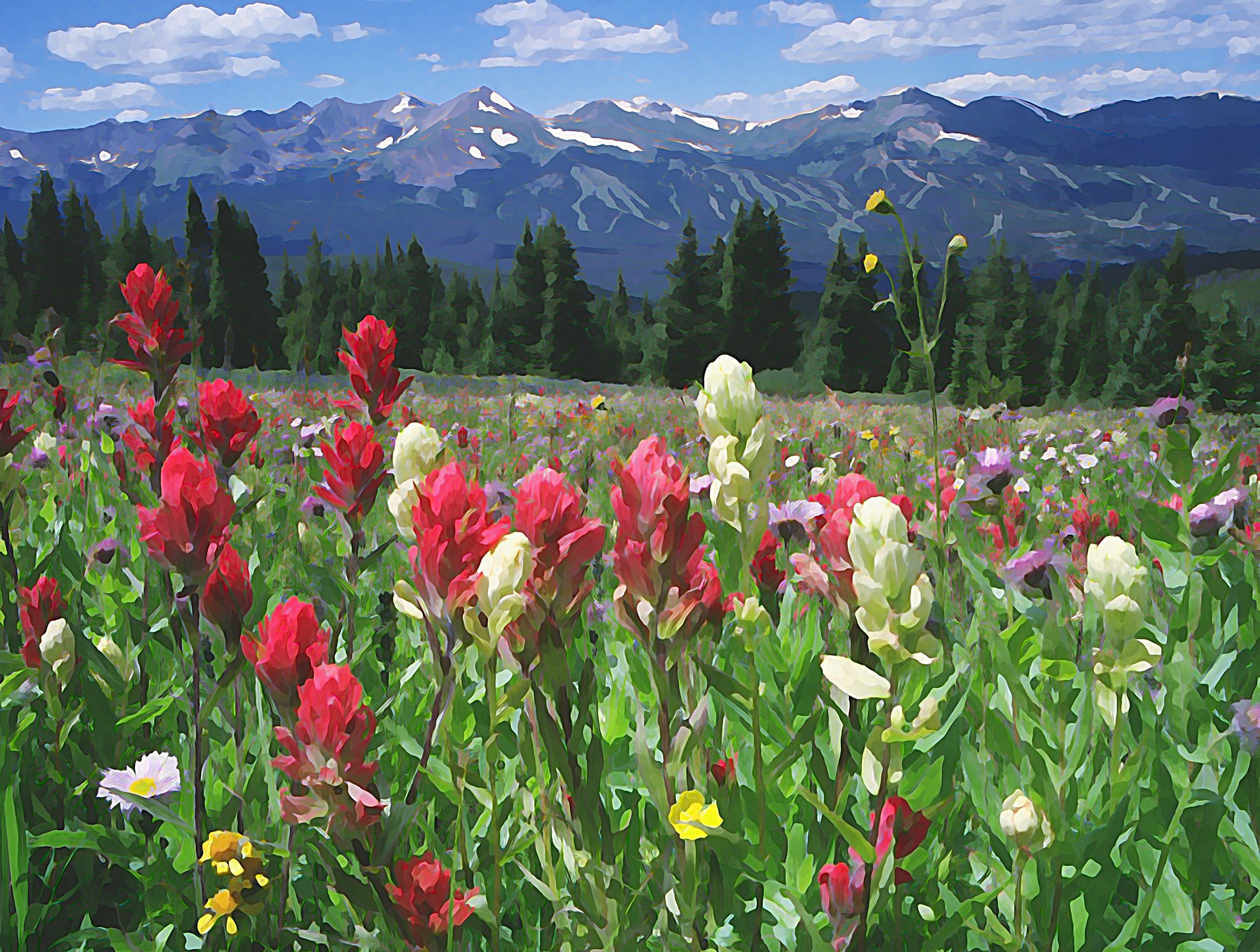"16""x20"" Photographic Print artistic effect Wildflowers above Breckenridge, Colorado 00003"