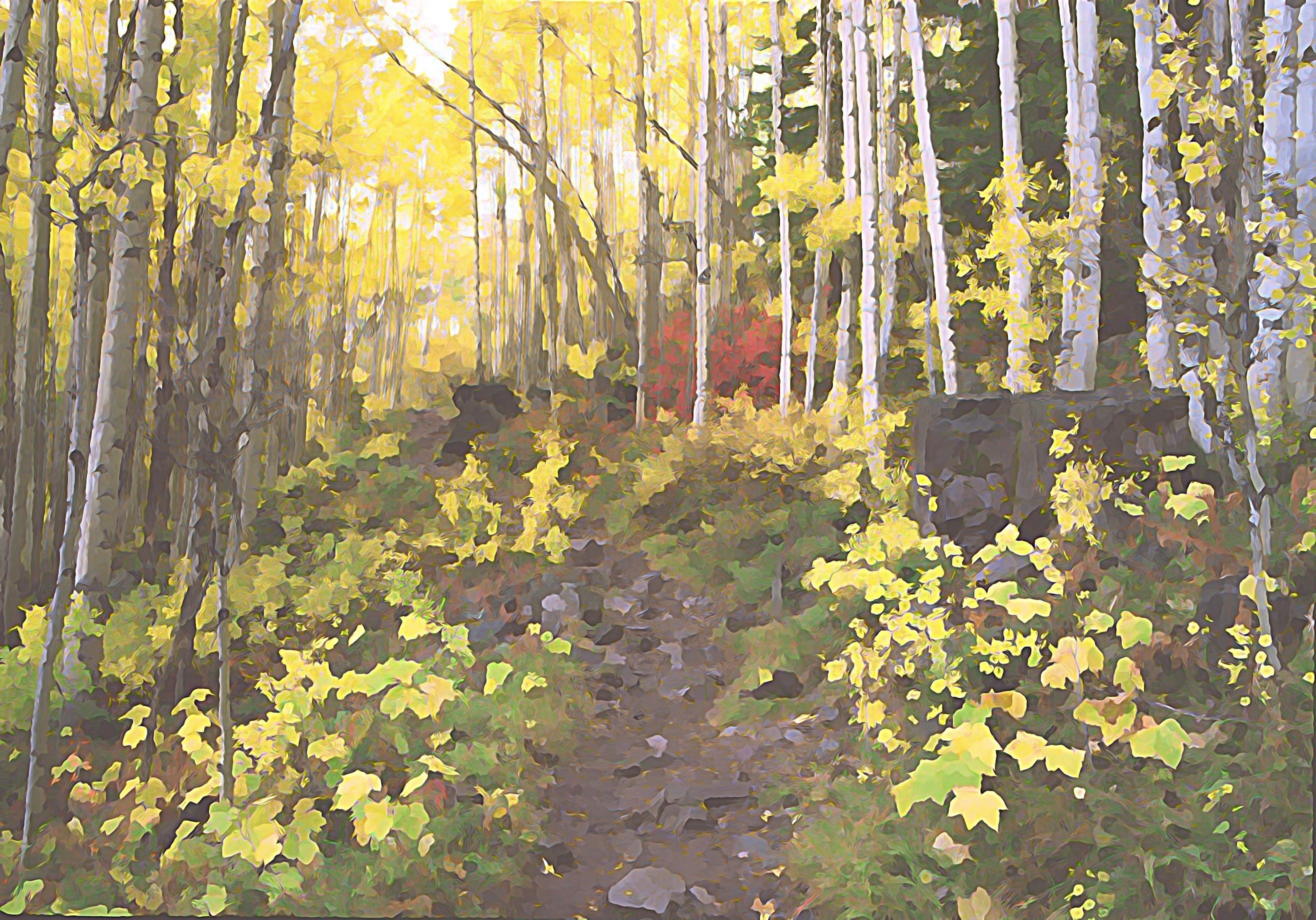 "16""x20"" Photographic Print artistic effect Aspen Trail above Maroon Lake, Colorado 00005"