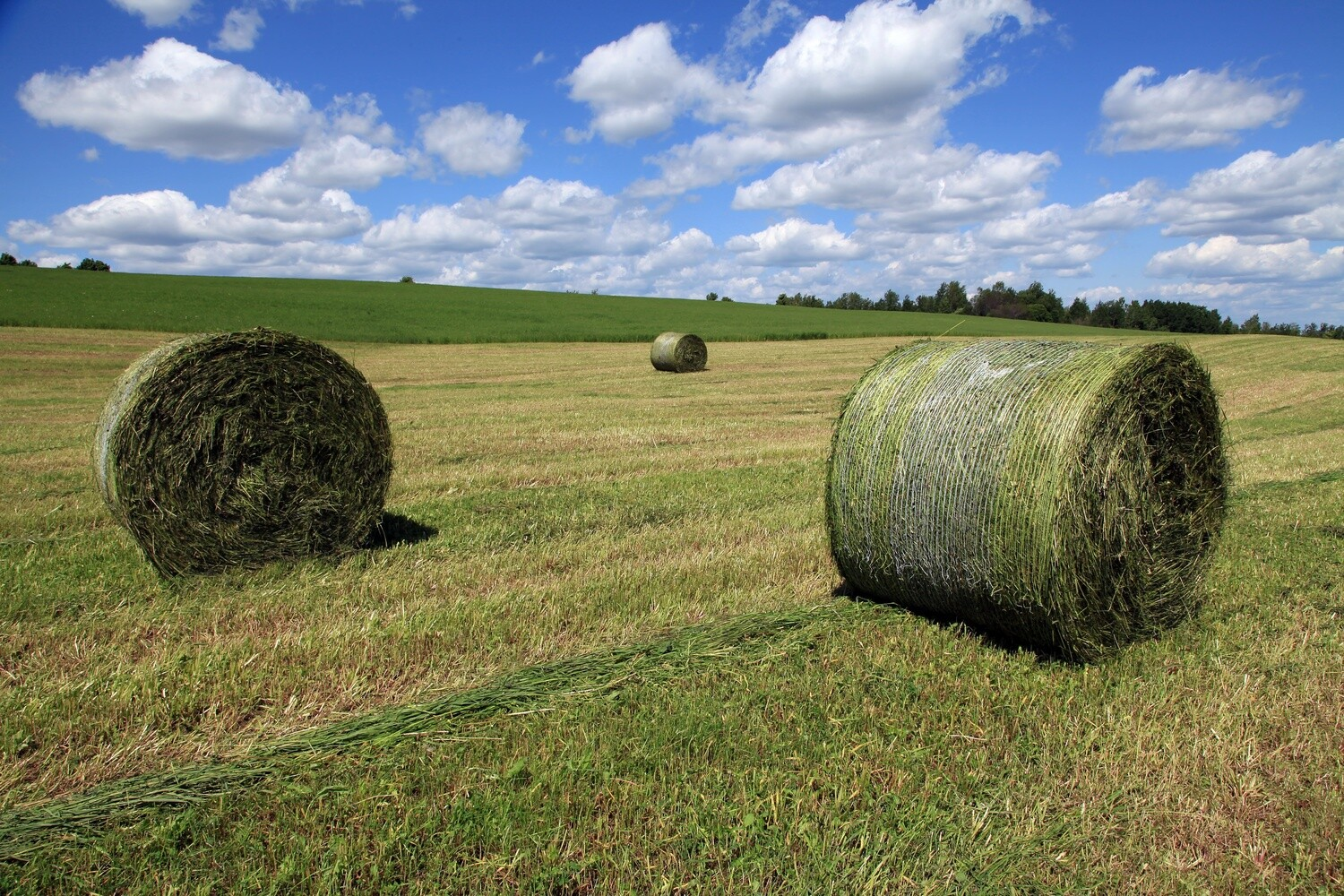 Haylage Nutritional Analysis by Dried & Ground NIRS