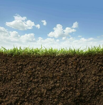 Soil Nitrogen (Mineral & Total N)