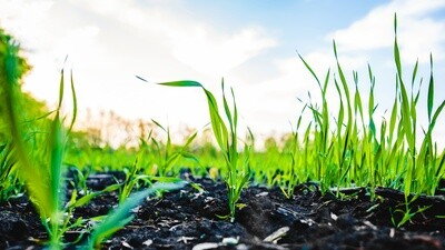 Leaf Tissue Macro & Micro Nutrients