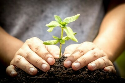 Micronutrients in Compost / Growing Media