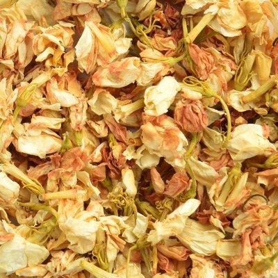 Jasmijnbloemen