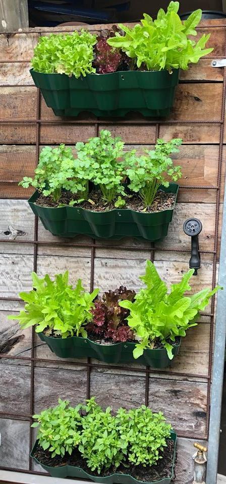 Vertical Wall Garden Planter 00004